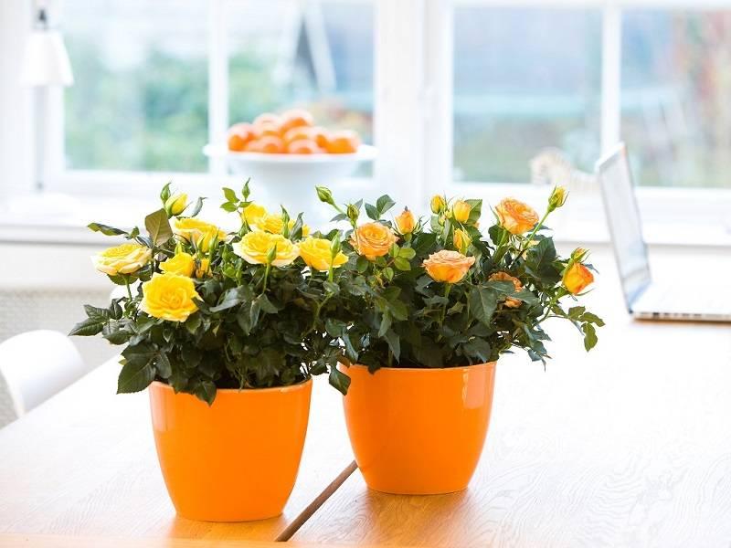 Цвет и цветы в нашей жизни